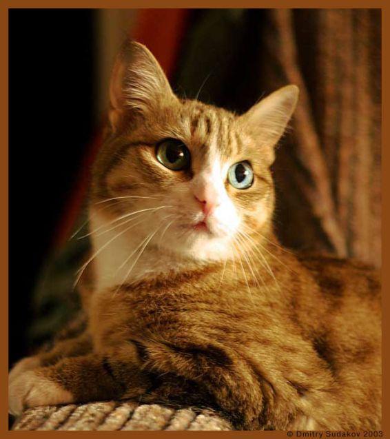 Животни: Котка