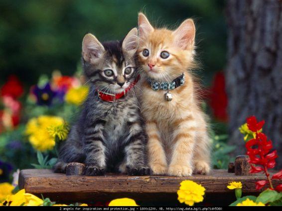 Животни: Романтика