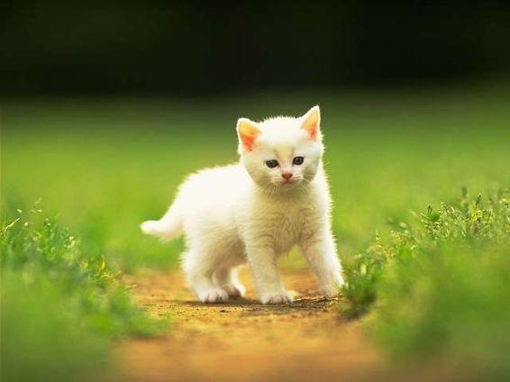Животни: Учудване в бяло