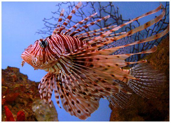 Животни: Рибка