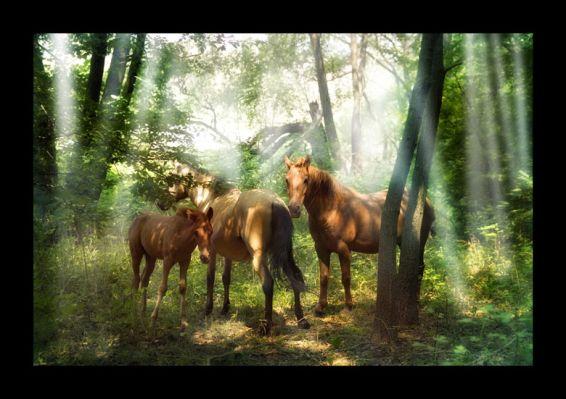 Животни: Нека бъде светлинa
