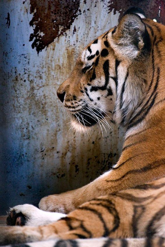 Животни: Следобедна дрямка
