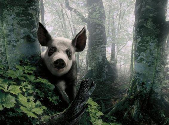 Животни: маскирана панда