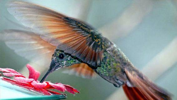 Животни: полет