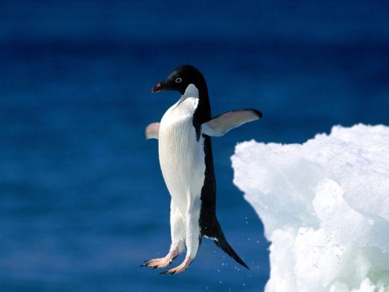 Животни: скок