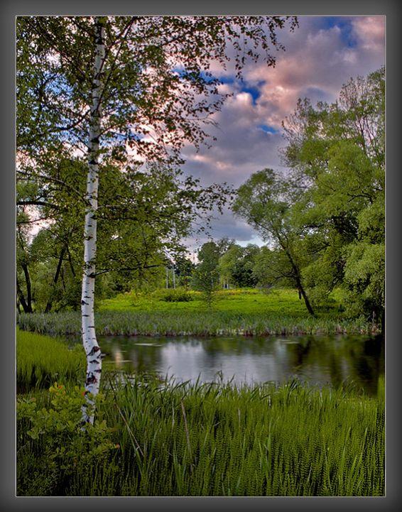 Горски пейзажи: Езеро в гората