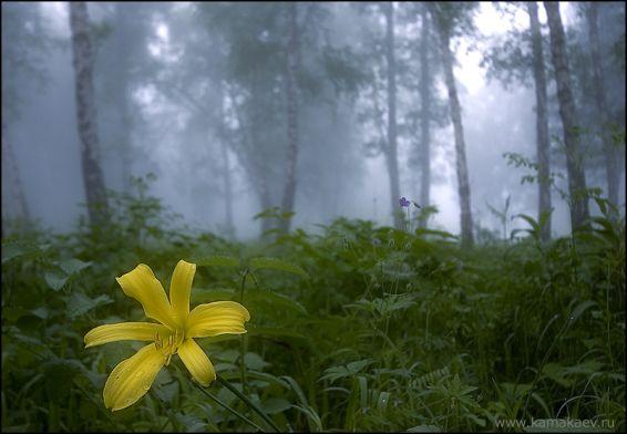 Горски пейзажи: Цвете в гората