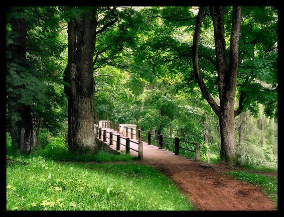 Горски пейзажи: Мост в гората