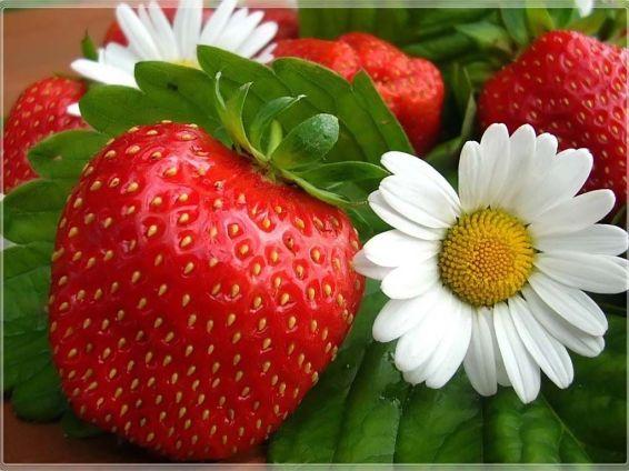 Плодове и зеленчуци: ягода