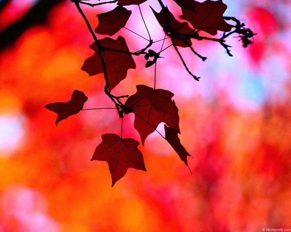Пейзажи: Есенна композиция