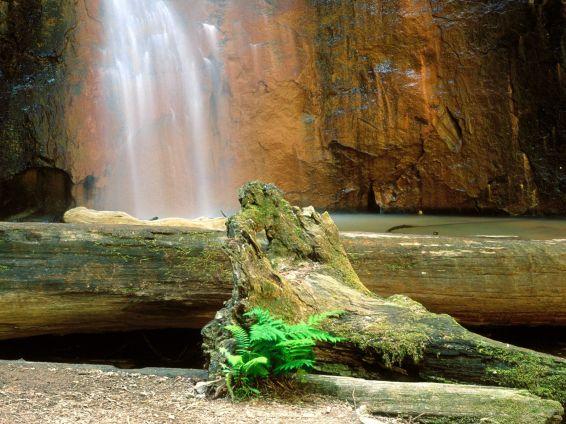 Водопади: Berry Creek Falls